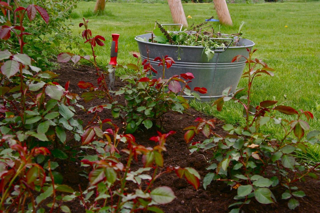 Unkraut jäten im Garten
